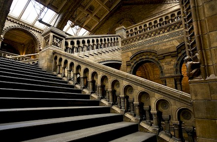 London Museum of Natural Science by Martin Rossi